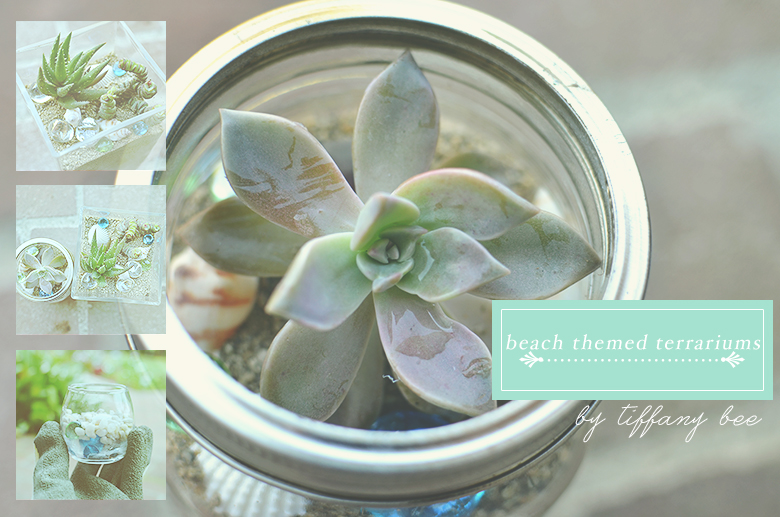 Beach Themed Terrariums